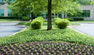 Howell Brothers Commercial Flower Beds