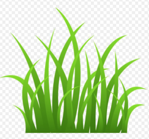 Howell Brothers Icon grass